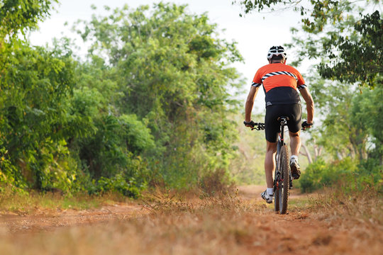 Rear View of the Cyclist Alone Riding on a Mountain Bike in Countryside Forest. Observes Social Distance. Copy Space.