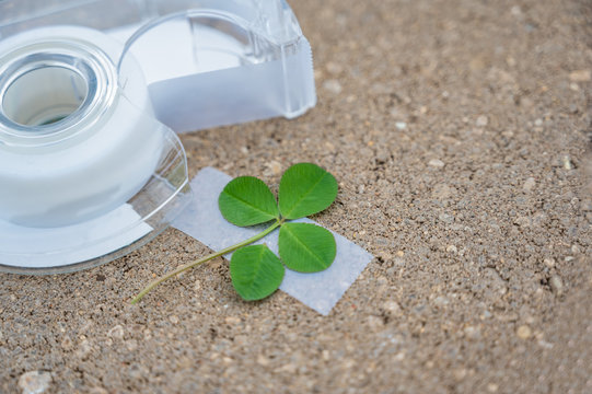 4-leaf clover made by taping on an additional leaf, a traditional good luck charm