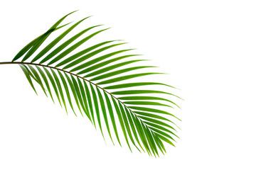 Wall Mural - leaves of coconut isolated on white background with clipping path for design elements, tropical leaf, summer background
