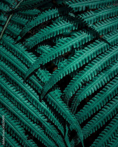 Wall mural closeup nature view of tropical fern leaf, dark wallpaper concept, abstract nature green background