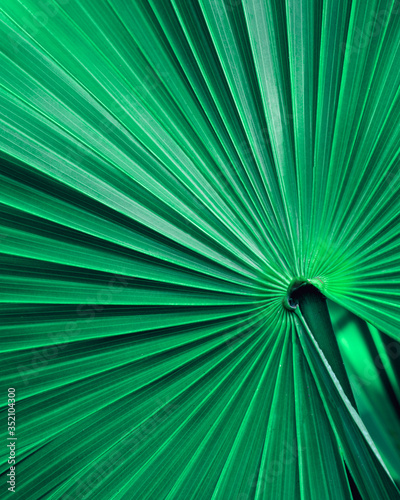 Wall mural closeup nature view of tropical palm leaf, dark wallpaper concept, abstract nature green background