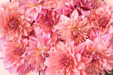 Poster de jardin Dahlia Full Frame Shot Of Pink Dahlia Flowers
