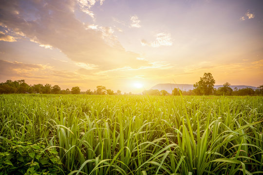 Sunset with small sugar plant in farm