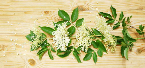 white elderberry blossoms on wooden board, banner