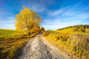 Fotobehang Meloen road with autumn tree near saddle Beskyd in Slovakia