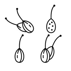 Capers, berry of caper-bush. Set of linear icons. Spicy spice with stalk. Black simple illustration of aromatic seasoning for food. Contour isolated vector emblem on white background. Packaging logo