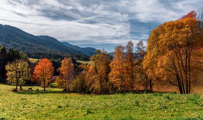 Fotomurales - Wonderful Alpine Landscape in Sunny day. Colorful Autumn scene. Dolomites Alps.