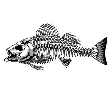 Bass fish skeleton monochrome concept
