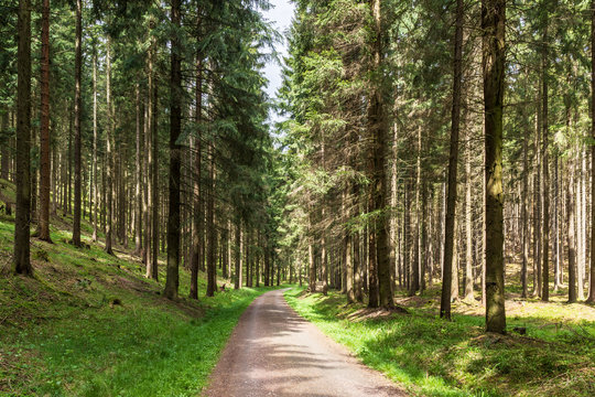 Wanderweg im Thüringer Wald