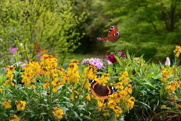 Schmetterling 644