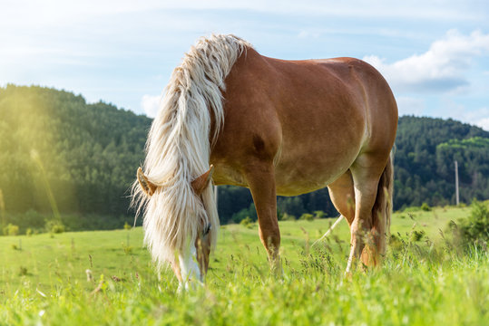 Horse grazing in a pasture with grass.