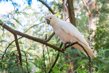 Large white parrot in the forest on blurred background closeup