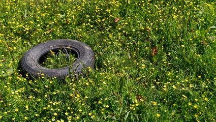 Discarded car tyre left in buttercup field