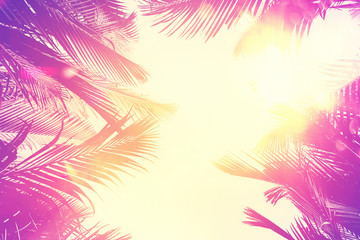 Wall Murals Candy pink Copy space of tropical palm tree with sun light on sky background.