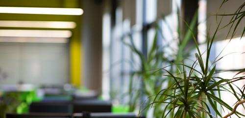 Obraz Evergreen tree or bush over blurred background in office - fototapety do salonu