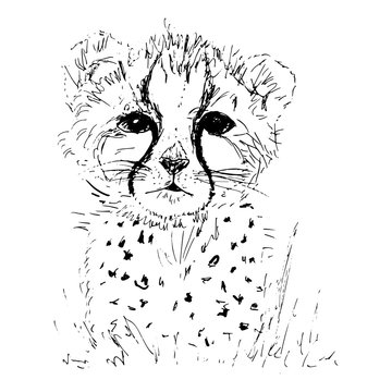 Cheetah baby vector illustration. Sketch drawing of a wild leopard or jaguar in black ink on white background.
