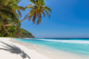 Beautiful white sand beach with coco palms and turquoise sea in Jamaica island.