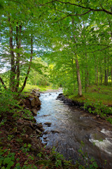 stream in the forest. beautiful nature background. peaceful scenery with water flow among rocks and beech trees in spring