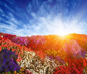 Wall Mural - Landscape of flower field