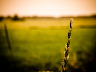 Close-up Of Grass On Agricultural Field Fototapete