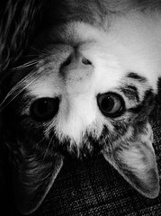 Foto op Canvas Hand getrokken schets van dieren Portrait Of Cat