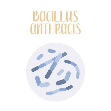 Bacillus Anthracis, pathogen. Rod-shaped, gram-positive bacteria. Morphology. Microbiology. Vector flat illustration
