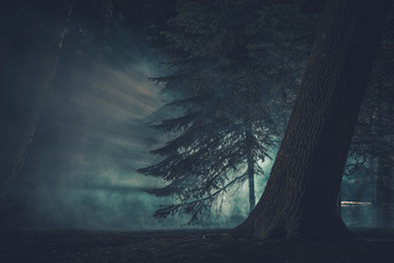 Wall Mural - Dark Mysterious Forest Covered by Strange Fog