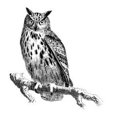 Wall Murals Owls cartoon Black and white owl cartoon