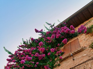 il davanzale fiorito con fiori di colore rosa
