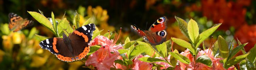 Schmetterling 676