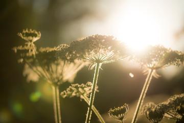 Obraz Close-up Of Plant - fototapety do salonu