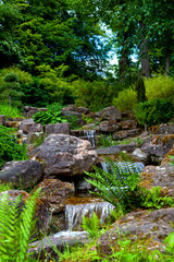 Japanese garden with a small stream