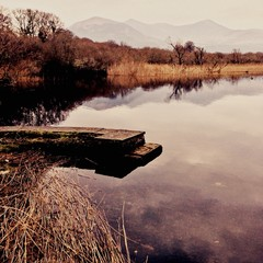Foto auf AluDibond Cappuccino Calm Lake Along Countryside Landscape