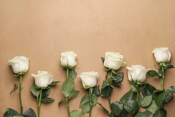 Beautiful white roses on color background