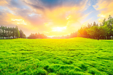Green grass and tree at sunset.