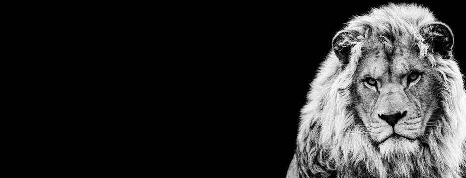 Template of Lion in B&W with black background