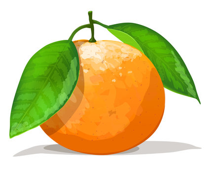 Orange with leafs isolated on white background. Vector illustration