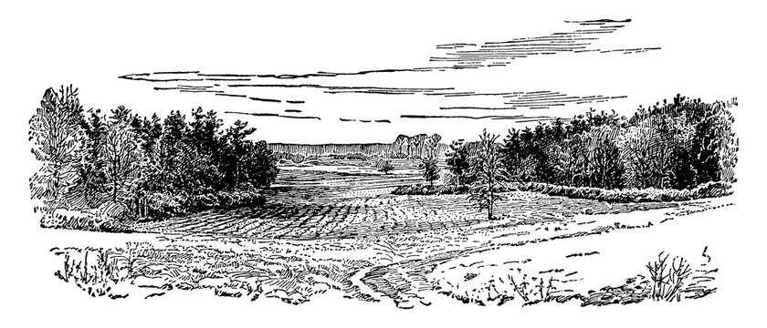 Bloody Angle of Spotsylvania, vintage illustration.
