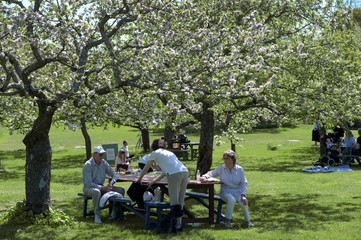 People enjoy the sunny weather at a garden cafe at Djurgarden in Stockholm