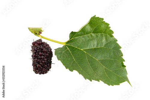 Fototapete Ripe mulberry and leaf isolated on white background with clipping path.