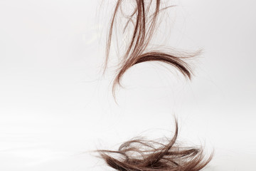 Fototapeta background or texture for a hair salon. a wisp of dry brown hair falls on a light gray background. Part of the cut hair on a white background obraz
