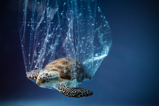 Turtle in plastic bag in ocean. Platic pollution problem. World oceans day concept. Environment concept.
