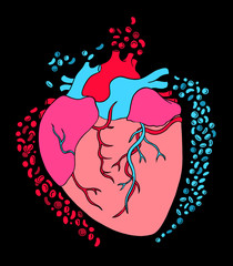 Heart and cells