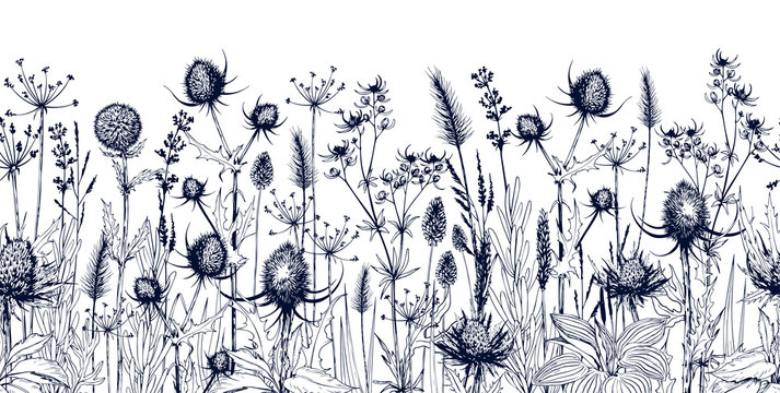 Seamless horizontal background with meadow wild herbs and flowers.