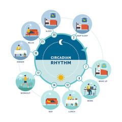 Circadian rhythm and daily activities