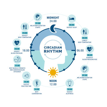 Circadian rhythm and sleep-wake cycle
