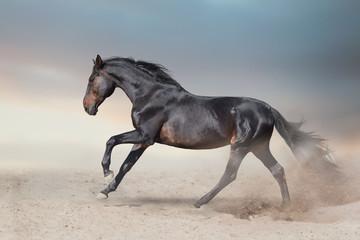 Wall Mural - Bay stallion free run fast on desert dust