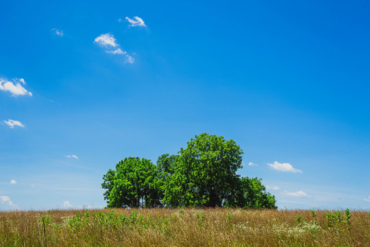 A stand of green trees behind a field of yellow late summer grass against a blue sky