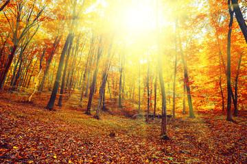 Garden Poster Sunrise in autumn forest