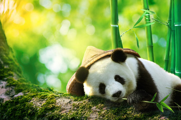 Giant panda wearing a bamboo hat resting in a tree eating bamboo shoots